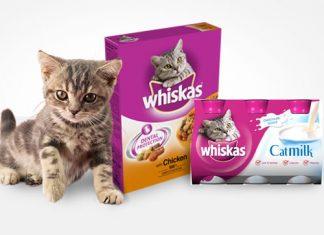 Cat News   Whiskas Launch New 'Best Ever Recipe' Range