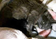 Mother of born kittens