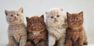 Cute Kittens For Free