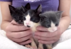 Kind Woman Saves Desperate Kittens