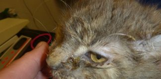 Couple Given Suspended Jail Term after Causing Cat To Suffer