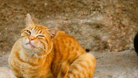 UK Cat News | Fleas are on Their Way Warn PDSA