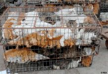 Animal Traffickers Sell Cats And Dogs