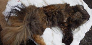 Poor Cat Killed