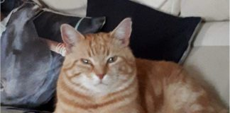 Cat News Owner Distressed - Shoot cat