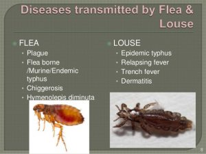 Stats Reveal How much Fleas Impact our Pets