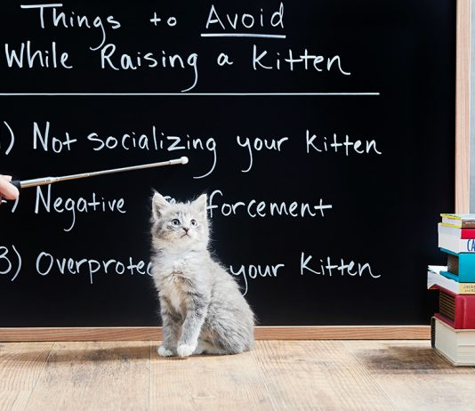 Best Way To Raise A Kitten 2018