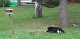 Cat Starts Chasing Squirrel