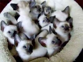 14 Cats Crying and Desperate For Someone
