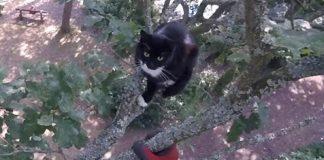 Dorset Cat Rescuer