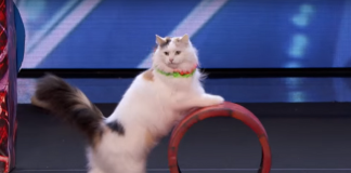 These Cats Are More Famous Than We Are