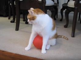Kitty's Favourite Toy