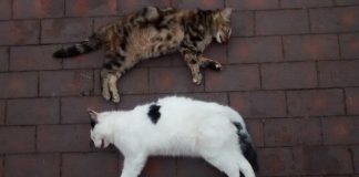 UK Cats Dead After Heatwave