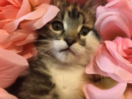 Woman Spends An Hour Frantically Searching For Lost Kitten