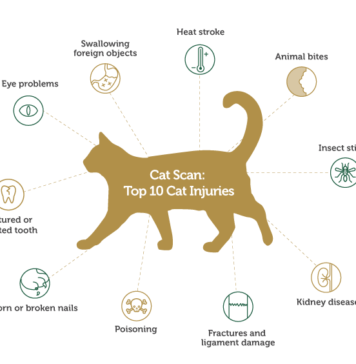 The Most Common Cat Injuries And How To Detect Them