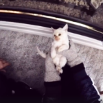 Family Finds Frozen Kitten In Snow