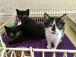 Investigation after Man on Bicycle Threw Three Poorly Kittens into a Bush