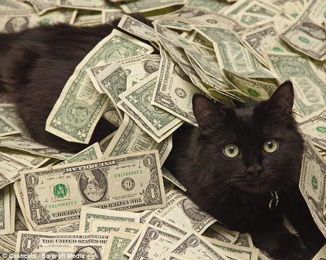 Cat jackpot gambling galabingo
